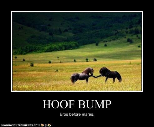 Hoof BumpHoof Bump, Real Life, Best Friends, Funny Pictures, Random Things, So Funny, Wild Hors, Animal, Fist Bump
