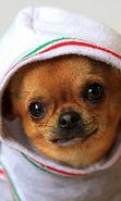 Descargar gratis fondos de pantalla para teléfono o tableta. Descargar gratis fondos, imágenes, fondos de pantalla animados: Perros,Animales, 40759.