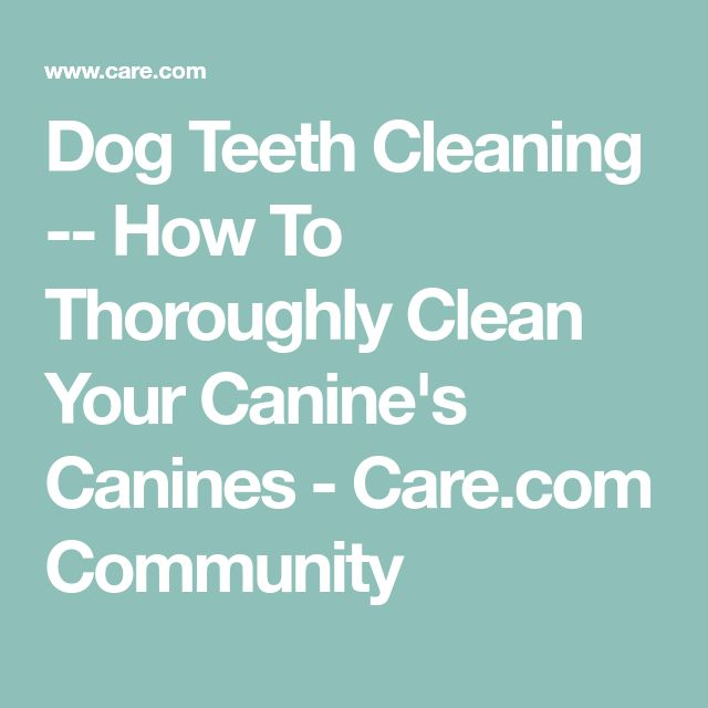 Dog Teeth Cleaning -- How To Thoroughly Clean Your Canine's Canines - Care.com Community