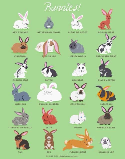 Love these adorable drawings of different rabbit breeds!
