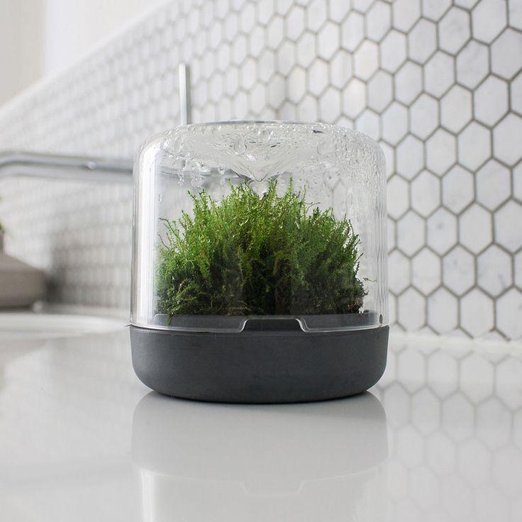 top3 by design - Botanica Boutique - mossarium mini charcoal