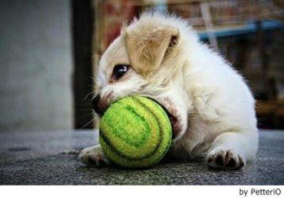 Un perro adiestrado no lo muerde todo pero, ¿Cómo hacerlo?