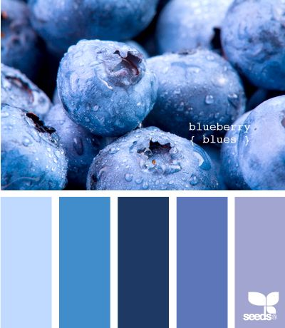 blueberry blues #designseeds