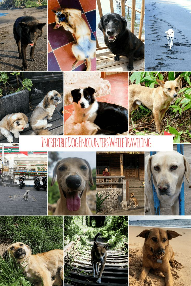 Dog encounters while traveling can leave just as big of an impression on us as a new dish or an iconic temple. In this post, we've compiled over 20 stories of incredible encounters with pups from all around the world. We dare you not to fall in love! via @BuddyTTMonkey