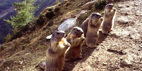 Auf Den Spuren Der Murmeltiere Am Spielboden In 2020 Murmeltier Wanderung Bergstation