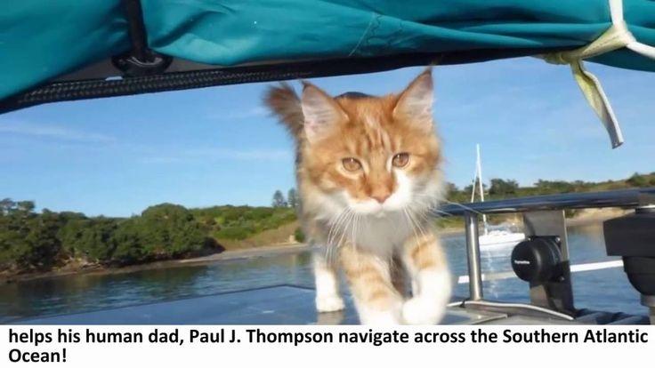 Fauna Excepcional #8: Skatty es un gato oyente, pero su compañero Paul J. Thompson es sordo. Skatty es polidáctil, es decir, con dos dedos más y de raza Maine Coon. Paul es programador informático y vive en Nueva Zelanda. Ambos navegan juntos en el barco que el mismo Paul construyó, La Chica, de 10 metros de eslora. Skatty ha aprendido sin entrenamiento que su compañero Paul es sordo, así que Skatty presta sus oídos a Paul: le avisa tocando su rodilla cuando se aproxima otro barco o cuando…