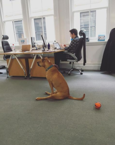 Bobbi's spending so much time in the office that she's becoming more human-like everyday