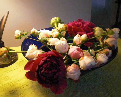 Peonies!  Buds I salvage near the end of the season.Seasons, Job, Salvaged, Offer, Peonies