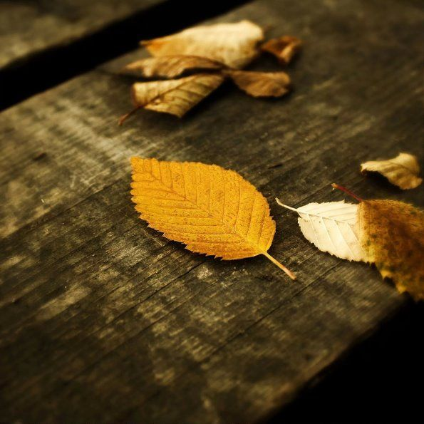 Autumn meaning gradually thick..#autumn #photography