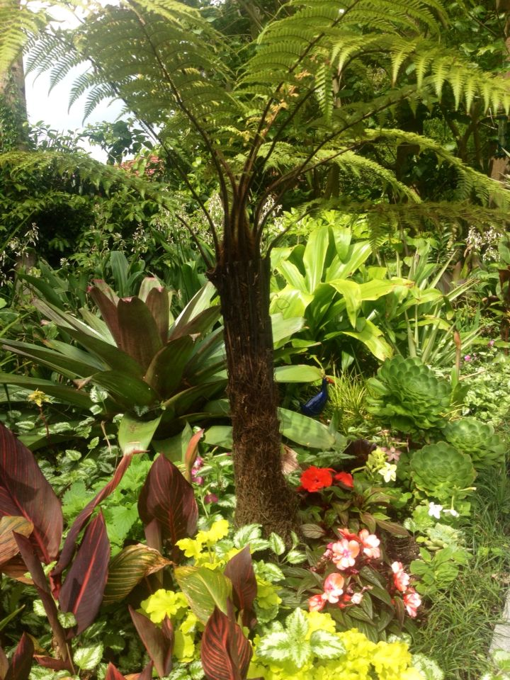A young Punga ( tree Fern ) planted for future shade over the terrace, 2014