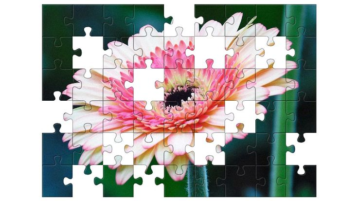 Free Jigsaw Puzzle Online - Gerbera  #Game #JigsawPuzzle #Puzzle #freegame