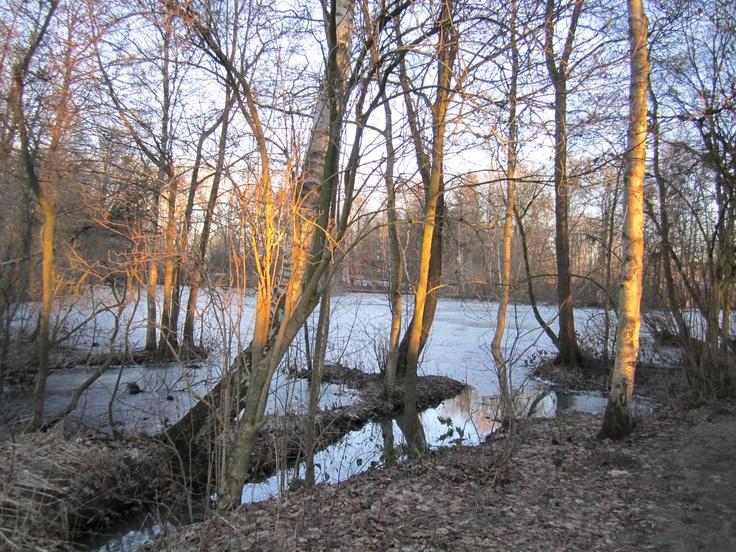 Klokkedammen i skoven tæt på Nebsager kirke, Hornsyld