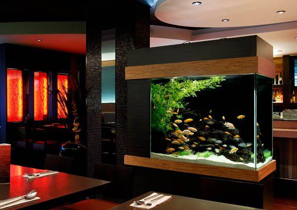 freshwater aquariums | Saltwater Aquariums Ponds & Water Features Freshwater Aquariums Fish ...