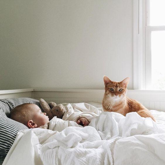 распространенная смешные картинки с младенцами и животными с добрым утром одна фотография книге