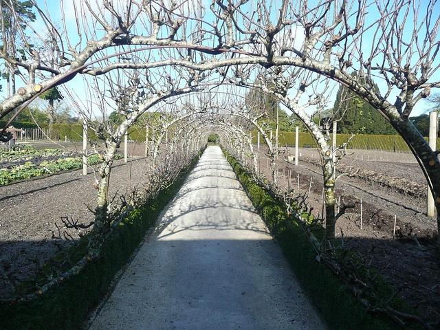 Espelier fruit trees: Gardens Ideas, Secret Gardens, Organic Gardens, Espelier Fruit, Espalier Fruit, Gardens Espalier, Photo, Gardens Growing, Espeli Fruit Trees
