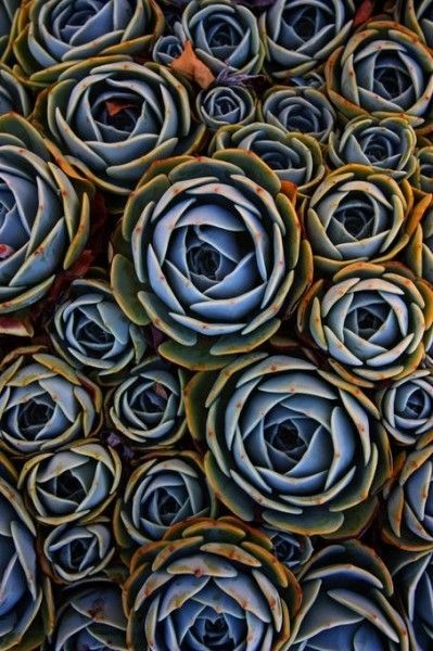 Les 25 meilleures id es concernant le tableau jardin en for Decoration jardin spirale