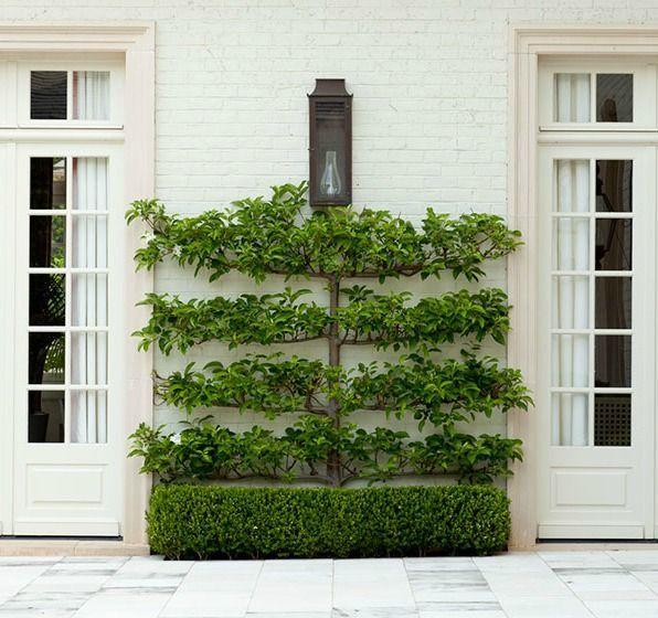 Climbing Vine | Design Chic | Howard Design Studio