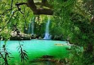 groene natuur - Google zoeken