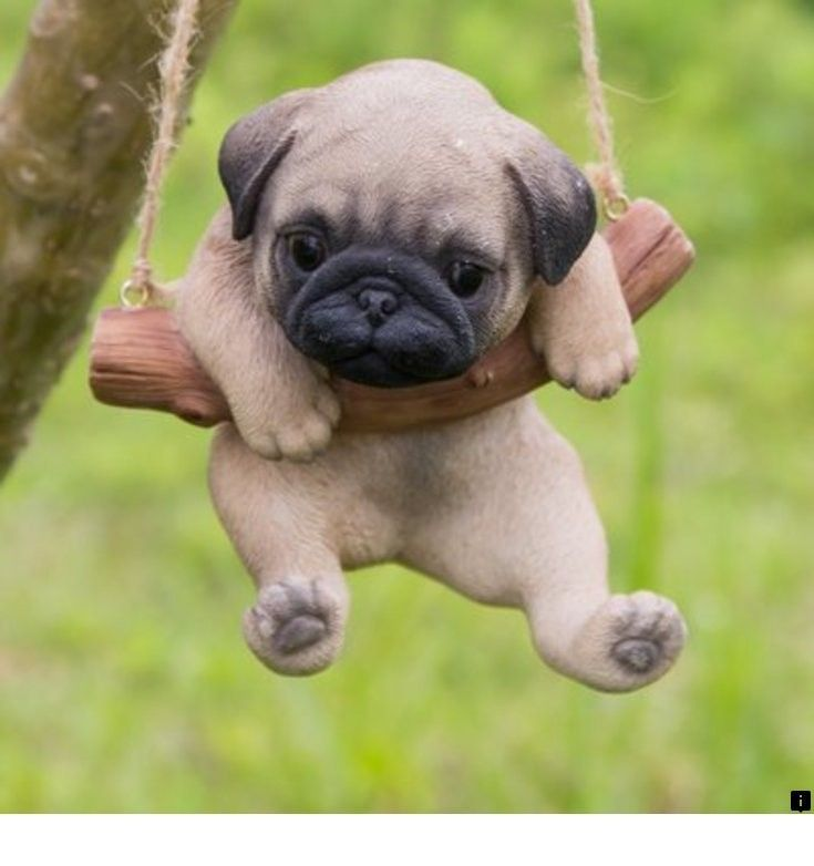 Read More About Puggle Puppies For