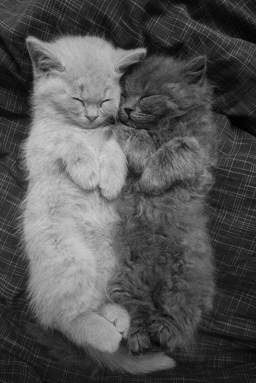 Cat nap adorable!!!!