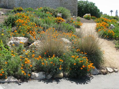 Native Plant Garden The Creation And Establishment Of The Outside  Ocean Side Garden Was Sponsored By The Palos Verdes Sunset Rotary And The  California ...