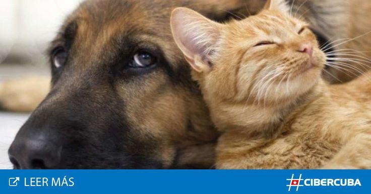 La situación de abandono que viven miles de perros y gatos en Cuba, debido principalmente a la sobrepoblación de los mismos en zonas urbanas, expone una de las principales problemáticas de la sociedad cubana actual, la falta de una ley que vele por el bienestar de estos animales.