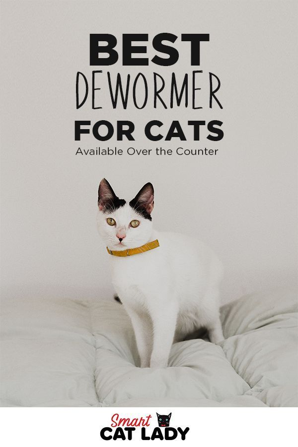 Best Dewormer For Cats Available Over The Counter Cat Care Tips
