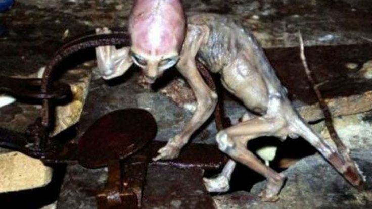 20 Proof Of Aliens Pictures Ever in earth