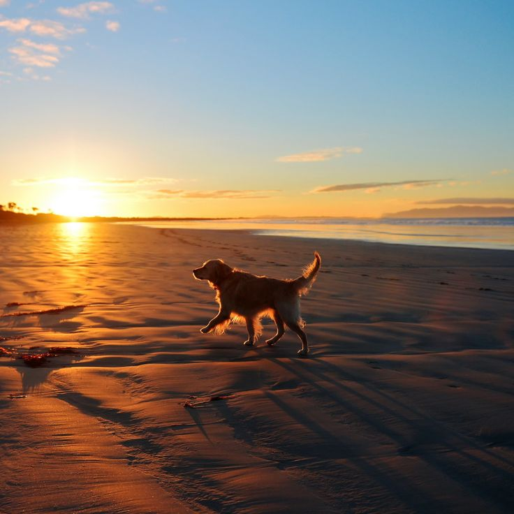 Dog at Sunset - Tap to see more cute dog wallpapers! | @mobile9