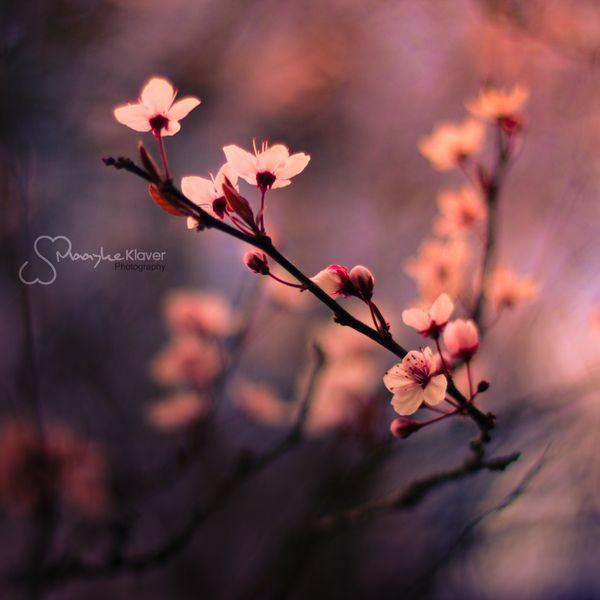 From Blossoms by MaaykeKlaver.deviantart.com on @deviantART