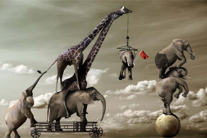 digital photography of elephants being lifted by giant giraffe crane by chris bennett