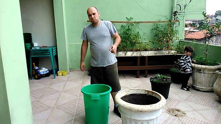 Como plantar árvores frutíferas em vasos