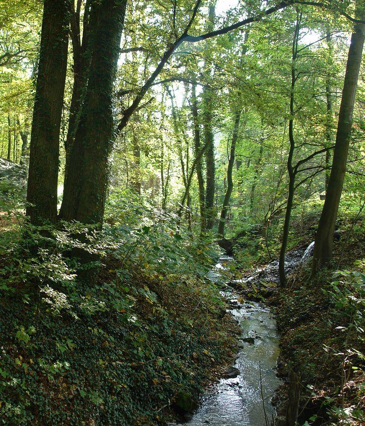 Gerade gefunden auf http://long-leg-photography-shop.fineartprint.de Bachlauf, Landschaft, Natur, Jahreszeiten