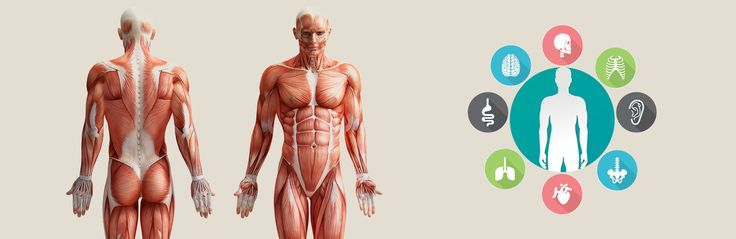 Stay upbeat in Education: Human Anatomy App Development