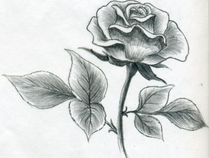 Zeichnen Lernen Mit Bleistift Selbst Kunst Schaffen Plan