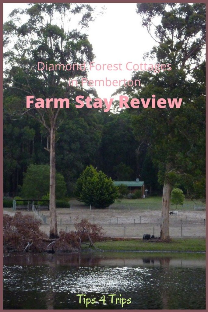A Review of this Pemberton accommodation at the Diamond Forest Cottages Farm Stay.  Perfect for Families, Kids and Couples alike. #FarmStay #Pemberton #WesternAustralia #SouthWestAsutralia https://www.traveltips4trip.com/pemberton-farm-stay-review-diamond-forest-cottages/