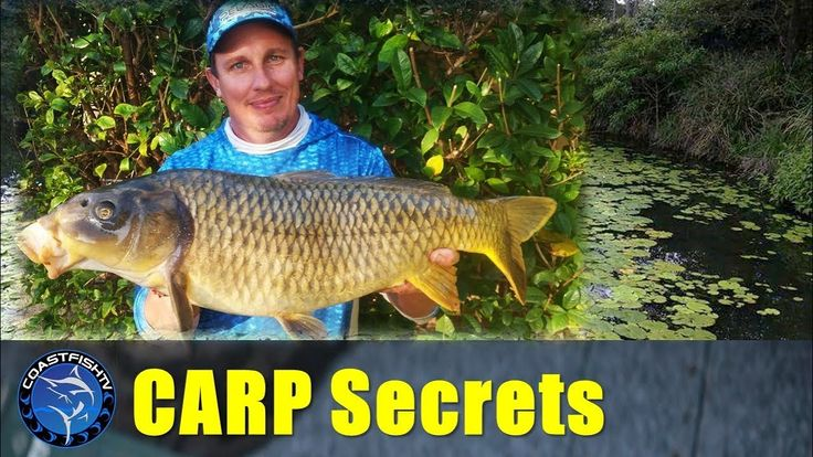 BIG CARP fishing | Tips and techniques | CoastfishTV