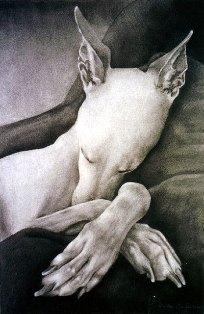 Charcoal drawing by Helle Jorgensen: Sleep Dogs, Hells Jorgensen, Greyhounds, Dogs Photography, Charcoal Drawings, Dogs Cat, Crosses Paw, Dogs Art, Dogs Photos