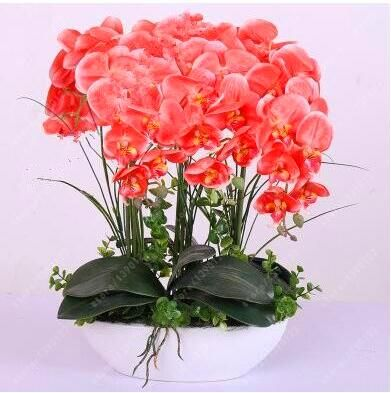 100PCS orchid-seed FLOWER seeds for home garden Phalaenopsis orchid seeds
