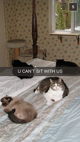 27 Snapchats From Your Cat – Meowingtons