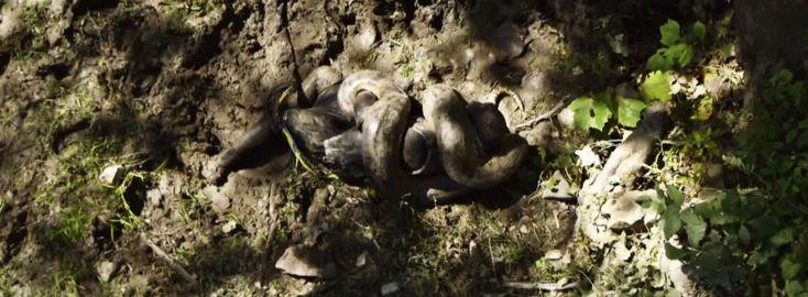 Anakonda nyeli le egészben Paul Rosolie-t, a vadon élő állatok szakértőjét a Discovery tévécsatorna filmelőzetesében.