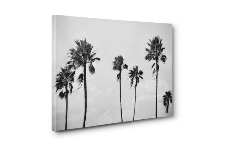 Add a black and white beach tropical accent to your interior settings with this gallery wrap canvas wall art hanging, featuring a tropical surf style landscape of palm trees throughout! Available in several different canvas sizes to choose from, this boho chic style interior hanging makes for a stylish addition to the walls and interiors of any loft dorm apartment or coastal style bungalow home setting! *Available in 8x10, 11x14, 16x20, 20x24 and 24x36 inches