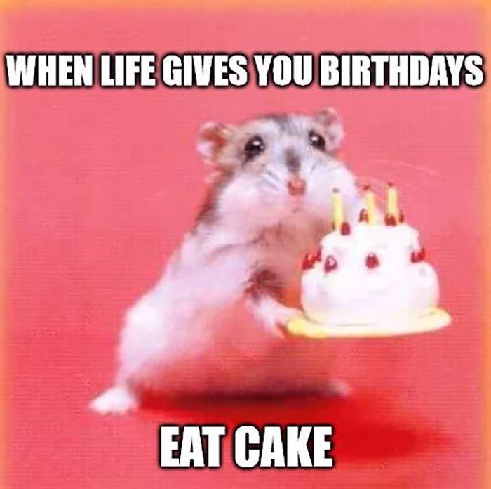46 Awesome Birthday Cake Meme Happy Birthday Quotes Funny Happy Birthday Animals Funny Happy Birthday Wishes