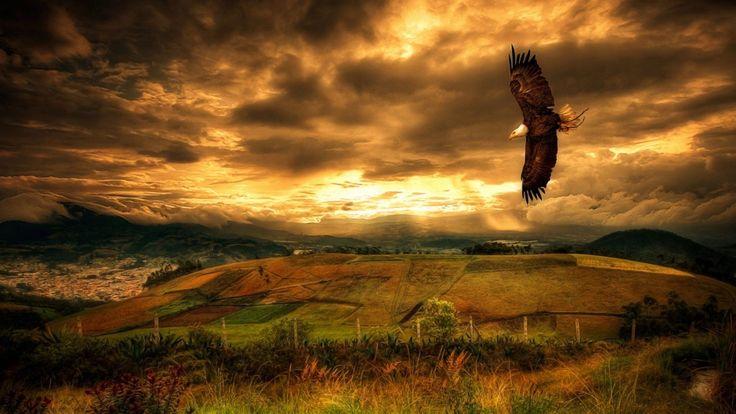 eagles-landscapes-clouds-landscape.jpg (1920×1080)