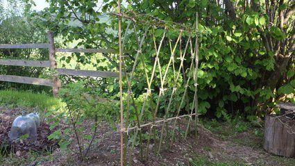 Pas-à-pas : réaliser une haie plessée en osier // http://www.deco.fr/jardin-jardinage/cloture-haie/actualite-558914-realiser-haie-plessee-osier.html