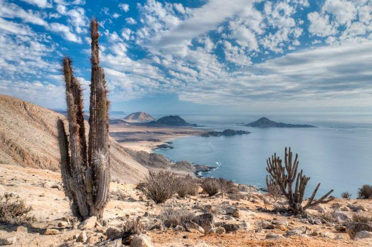Pan de Azucar, Costa de Atacama, Norte de Chile