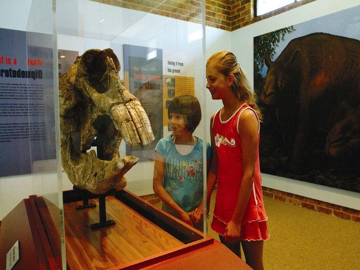 Australian Museum Diprotodon Exhibition