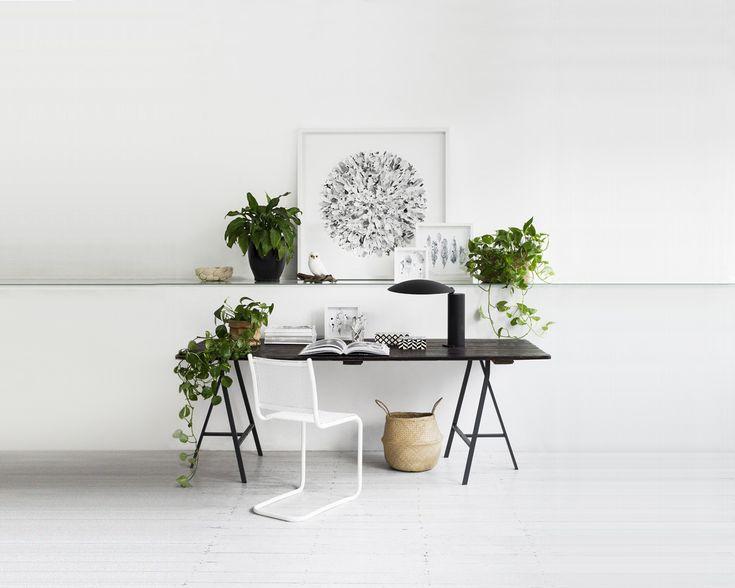Otto consigli per decorare la vostra scrivania con il verde, tra rampicanti, cactus, felci e piante aromatiche