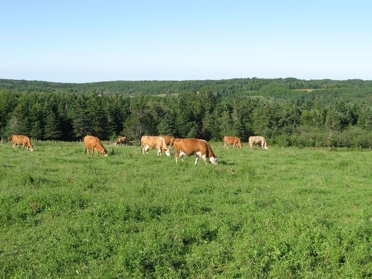 Jordan's Natural Acres - Gaspereau, Nova Scotia