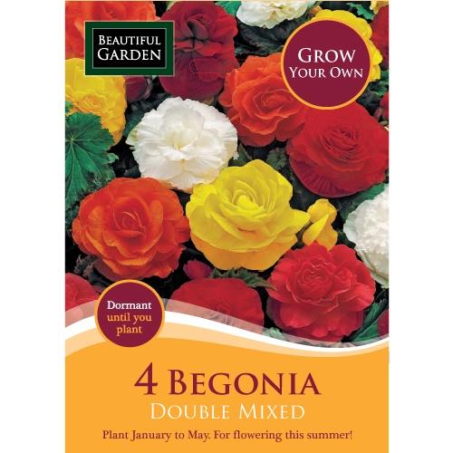 4 Begonia Double Mixed | Poundland
